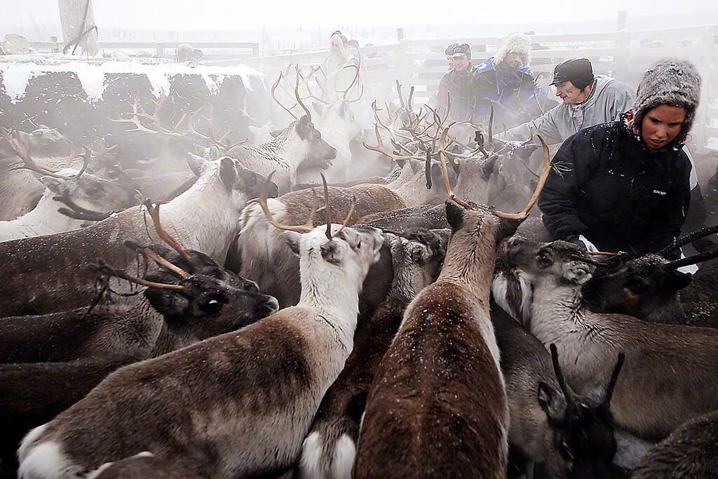 CHRISTMAS IN ARCTIC LAPLAND