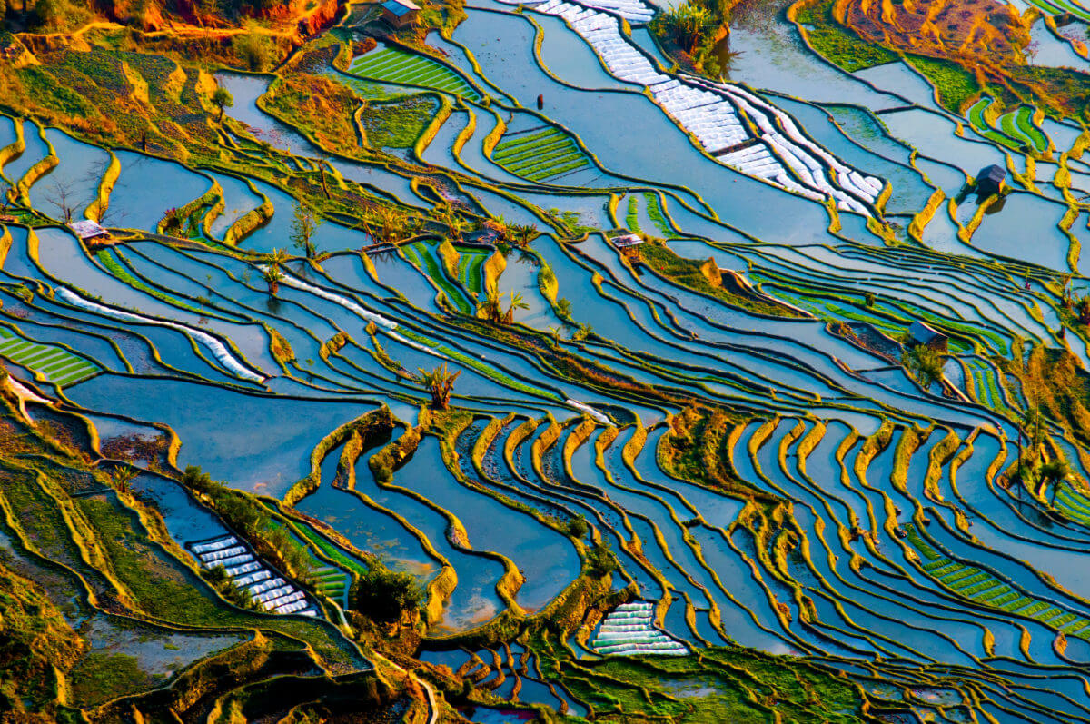 CHINA'S RICE TERRACES – AN AGRICULTURAL WORK OF ART
